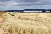 [The sand dunes at Dawlish Warren]