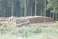 [Stacked timber waiting to be picked up]