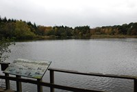 [The lake at Stover Country Park]